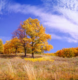 Oak tree on a meadow, autumn Stock Images