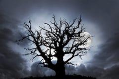 Oak tree with moon Stock Image
