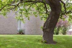 Oak tree near office building in Sandyford Stock Photos