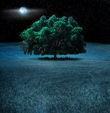 Oak tree at night. A large oak tree lit by a moonlit starry sky in a large pasture with foreground of grass