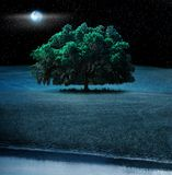 Oak tree at night Royalty Free Stock Images