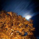 Oak tree at night with stars on the sky.GN Royalty Free Stock Image