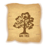Oak Tree on Old Paper Royalty Free Stock Photography