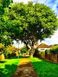 Oak tree on a peaceful path way. An old oak tree on a quiet and peaceful country path way with a detached house and garden behind a wooden fence royalty free stock photography