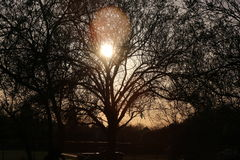 Oak Tree. This is a photo of a sun setting through an Oak tree Royalty Free Stock Image