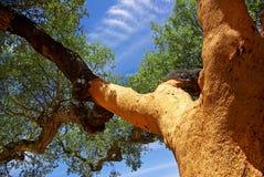 Oak tree at Portugal. Oaks tree at Portuga, Alentejo region Royalty Free Stock Photography