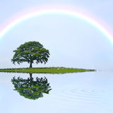 Oak Tree and Rainbow Royalty Free Stock Photos