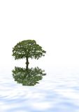 Oak Tree Reflection Stock Images