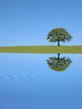 Oak Tree Reflection Royalty Free Stock Photography