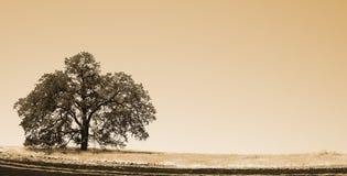 Oak Tree on the ridge Stock Image