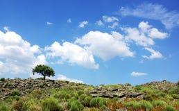 Oak tree,  rocks at north of alentejo Stock Photo
