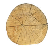 Oak tree, Round cut logs, isolated on the white background. Texture Stock Images