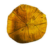 Oak tree, Round cut logs, isolated on the white background. Texture royalty free stock images