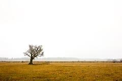 Oak tree in rural landscape Royalty Free Stock Image