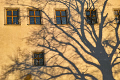 Oak tree shadow on old building facade Royalty Free Stock Photos