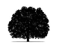 oak tree silhouette Royalty Free Stock Images