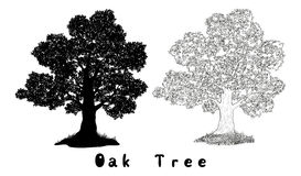 Oak Tree Silhouette, Contours and Inscriptions. Oak Tree with Leaves and Grass Black Silhouette, Contours and Inscriptions Isolated on White Background. Vector Stock Photo