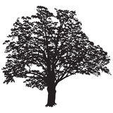 Oak tree silhouette with leaves in the black-and-white vector im stock photo