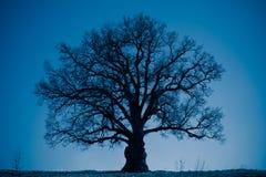 Oak tree silhouette at night Royalty Free Stock Photos