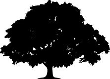 Oak Tree Silhouette On White Background Royalty Free Stock Photos
