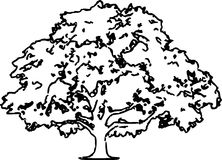 Oak Tree Sketch Illustration /eps Royalty Free Stock Images