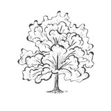 Oak tree sketch tree silhouette Royalty Free Stock Image