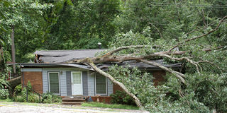 Oak Tree Smashes House Stock Images