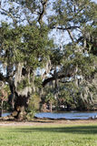 Oak tree with spanish moss at pond. Giant oak tree with spanish moss at pond water's edge Stock Photos