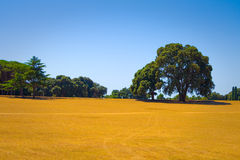 Oak tree  standing alone in a field Stock Images