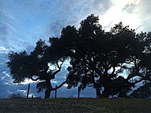 Oak tree in a stormy sunset Stock Photo