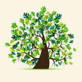 Oak tree, summer stock illustration
