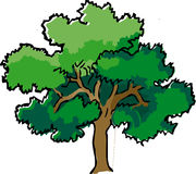 Oak, Tree, Summer, Branches, Leaves Royalty Free Stock Photography