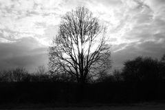 Oak tree from the sun under clouds of Spring 2017 Royalty Free Stock Images