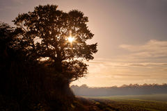 Oak tree sunset Stock Photos