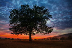Oak tree at sunset in autumn Stock Photos