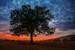 Oak tree at sunset in autumn Stock Photos