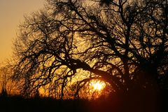 Oak tree sunset. This was taken at Rasmussen Park, Cameron Park, California Royalty Free Stock Images