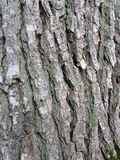 Oak Tree Texture Royalty Free Stock Photos