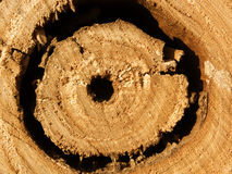 Oak  tree  texture  hole Royalty Free Stock Photography