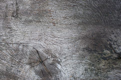 Oak tree texture Royalty Free Stock Image