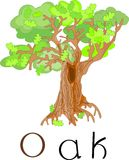 Oak-tree with title Stock Image