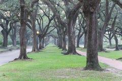 Oak tree tunnel foggy morning Houston, Texas, USA Stock Photo