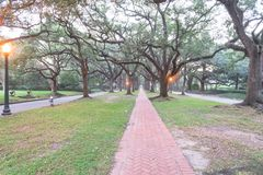 Oak tree tunnel foggy morning Houston, Texas, USA Royalty Free Stock Images