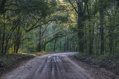 Oak Tree Tunnel in Lowcountry Charleston South Carolina royalty free stock photo
