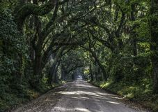Oak Tree Tunnel Road to Botany Bay Plantation in Editso Island S stock image