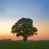 Oak Tree at Twilight Stock Photo