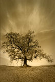 Oak Tree Under Fair Weather Sky Stock Photos