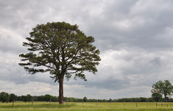 Oak Tree under Stormy Skies Stock Images