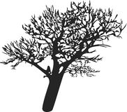 Oak tree vector silhouette white background Royalty Free Stock Photos