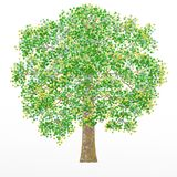 The oak tree on the white background. The illustration can be used as a logo and wallpaper. stock illustration
